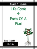 Plant Label & Life Cycle- Bilingual