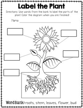plant labeling worksheet free by amanda 39 s little learners tpt. Black Bedroom Furniture Sets. Home Design Ideas