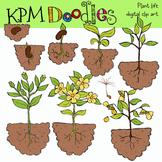 Plant Life Clip Art