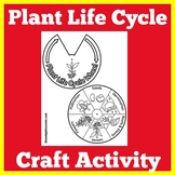 Plant Life Cycle Activity | Craft