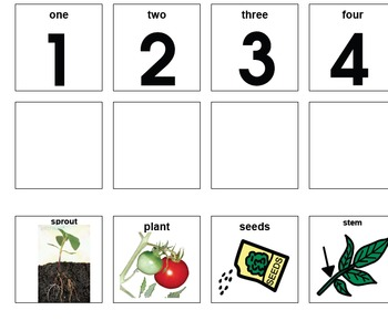 Plant Life Cycle, 4 Picture Sequence