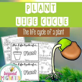 Plant Life Cycle 48 Pages for Differentiated Learning + Bonus Pages