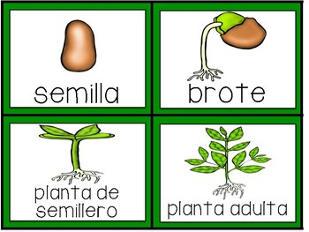 Plant Life Cycle Activities in Spanish
