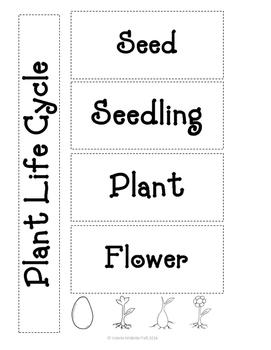 Plant Life Cycle Activity Set
