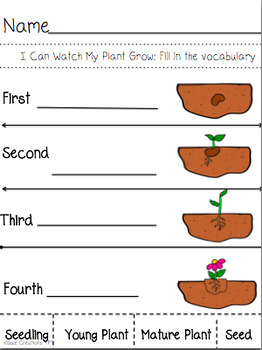 Plant Life Cycle Adapted Book and Worksheets