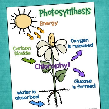 Plant Life Cycle Science Posters with Parts of a Plant & Photosynthesis  (FREE)