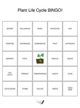 Plant Life Cycle BINGO!