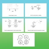 Plant Life Cycle Book Pack