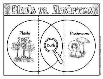 Plant Life Cycle Bundle