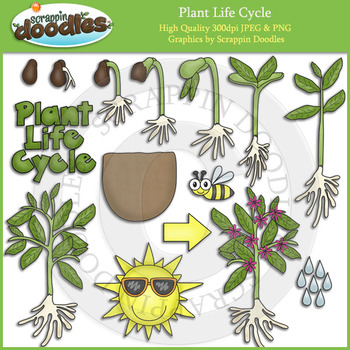 Plant Life Cycle