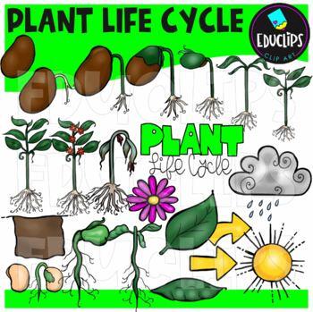 Plant Life Cycle Clip Art Bundle {Educlips Clipart}