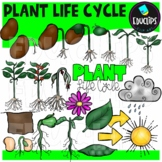Plant Life Cycle Clip Art Set {Educlips Clipart}