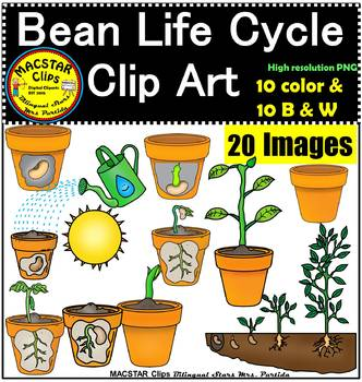 Plant Life Cycle Clip Art Personal and Commercial Use