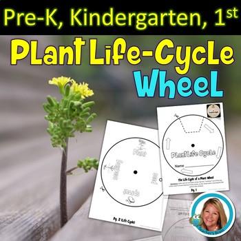 Plant Life Cycle Craft Activity - Wheel - Craftivity