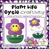 Plant Life Cycle Craft   Flower   Spring Activities   Life Cycle of a Plant