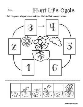 plant life cycle cut paste worksheet by beached bum teacher tpt. Black Bedroom Furniture Sets. Home Design Ideas