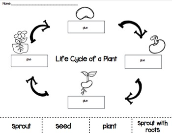 Plant Life Cycle Cut and Paste