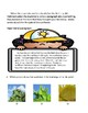 Plant Life Cycle ESL Practice Packets