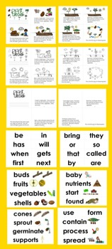 Plant Life Cycle Differentiated Readers - 3 Levels + Illustrated Word Wall
