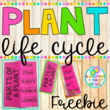 Plant Life Cycle {FREEBIE}