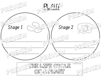 Plant Life Cycle Factball and Comprehension Sheet