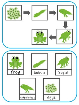 Frog Life Cycle File Folder Activity