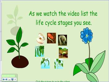 Plant Life Cycle First Grade