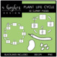 Plant Life Cycle Clipart {A Hughes Design}