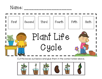Seed Life Cycle Worksheets