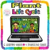 Plant Life Cycle Interactive Google slides/Google Classroom