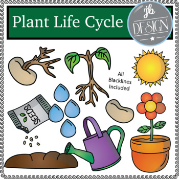 Plant Life Cycle (JB Design Clip Art for Personal or Commercial Use)