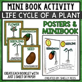 Bean Plant Life Cycle Book and Posters