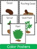 Plant  Life Cycle: Mini Unit