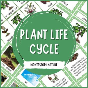 Plant Life Cycle - Montessori Inspired Printables