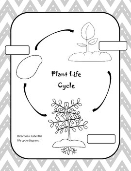 Plant Life Cycle Observation Journal