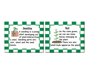 Plant Life Cycle Posters and Vocabulary Cards: