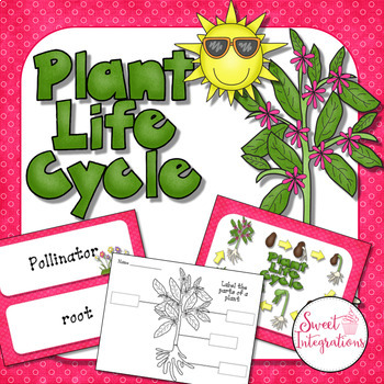 PLANTS LIFE CYCLE ACTIVITIES: Investigations, Slideshow, a