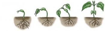 Plant Life Cycle Presentation
