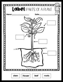 Plant Life Cycle {Print and Go} {ELA and Science}