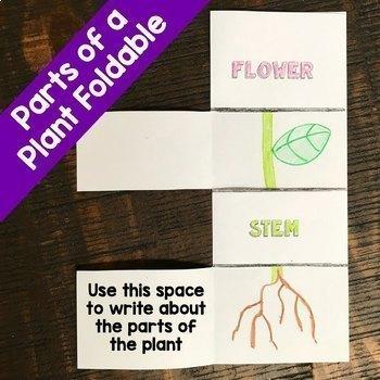Plant Life Cycle {Science, ELA} {No Prep! Print and Go!}