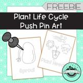 Plant Life Cycle Push Pin Art