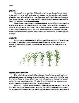 Plant Life Cycle Reading and Follow-up Questions