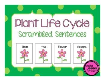 Plant Life Cycle Scrambled Sentences
