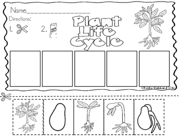 Plant Life Cycle Sequencing