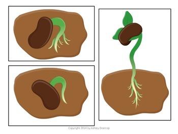 Plant Life Cycle Sort & Vocabulary Activity