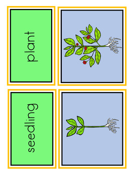 Plant Life Cycle Sorting Cards