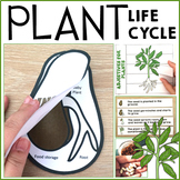 Plant Life Cycle Flip Books, Vocabulary Work, Science Activities
