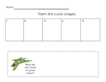 Plant Life Cycle Stages Lesson- WORKSHEET