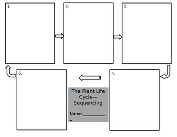 Plant Life Cycle Storyboard