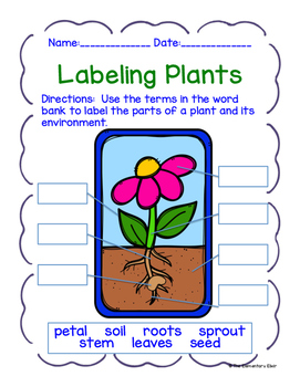 Plant Life Cycle Student Journal & Activity Set